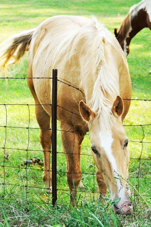 Horse Over Fence photo