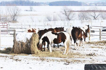 Horses in Winter photo