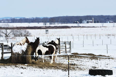 Horses in Winter photo