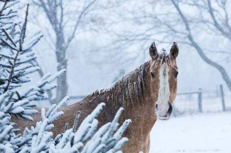 Paard in de winter Stockfoto
