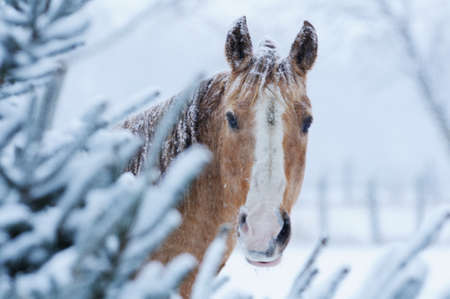Horse in Winter photo