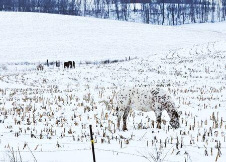 camouflaged: Camouflaged Horse