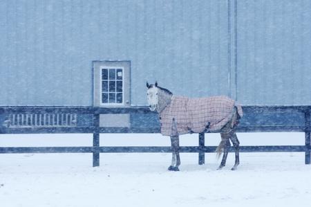 Snow Falling on Horse photo