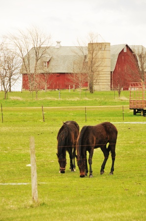 Two Horses Grazing photo