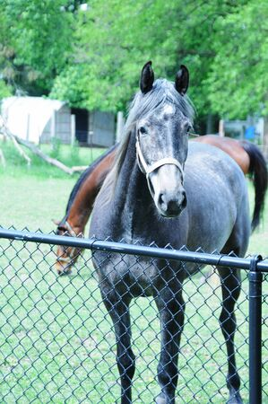 horse pipes: Horse at Fence