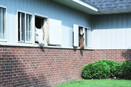 Horses in Windows photo