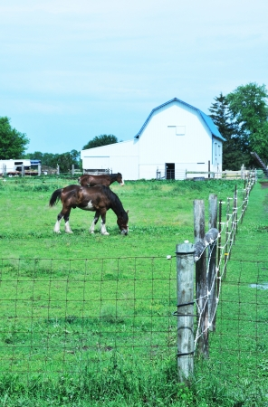 clydesdale: Horses and Barn