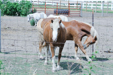 Horses in Dry Corral photo