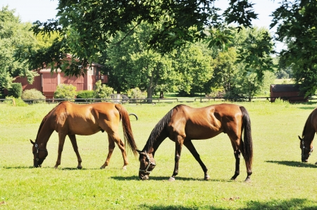 Horses Grazing Stock Photo - 15407793