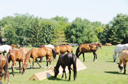 Herd of Horses Stock Photo - 15397838