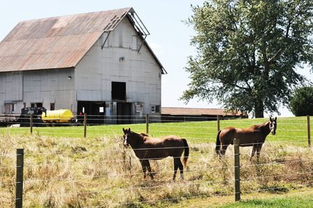 Two Horses in Corral photo