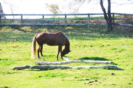 bowing: Horse Bowing