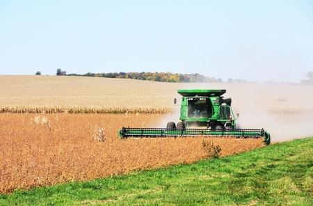 Soybean Harvest 版權商用圖片
