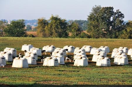 the hutch: Calf Hutches