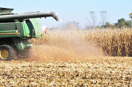 Harvesting Corn photo