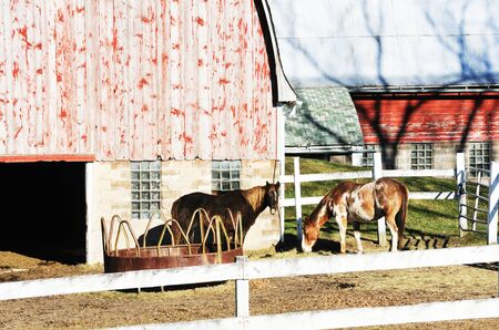 Horses by Barn photo