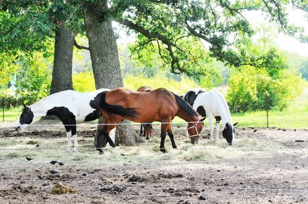 Horses in Corral photo