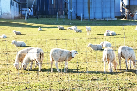 Sheep Farm photo