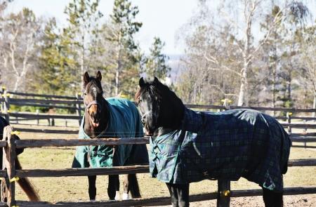 Two Horses Archivio Fotografico
