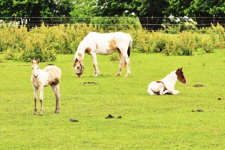 Horses in the field photo