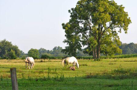 dapple horse: Two Horses Stock Photo