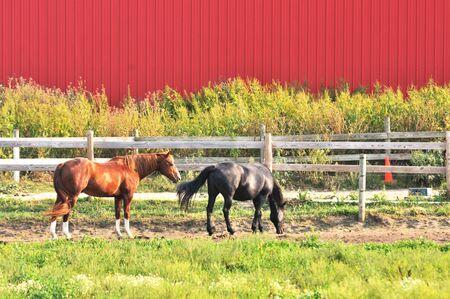 Horses by Barn photo