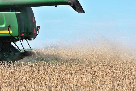 Soybean Dust 版權商用圖片