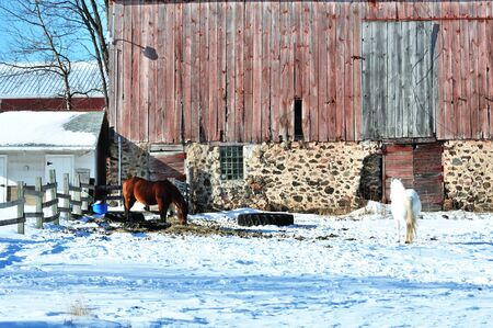 corral: Horses in Snowy Corral