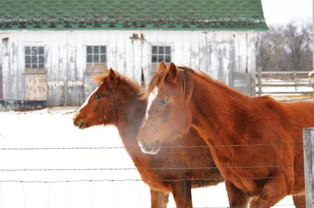 Cold Horses photo