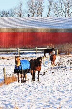 corral: Snowy Corral