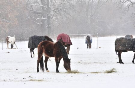 Horses in Snow photo