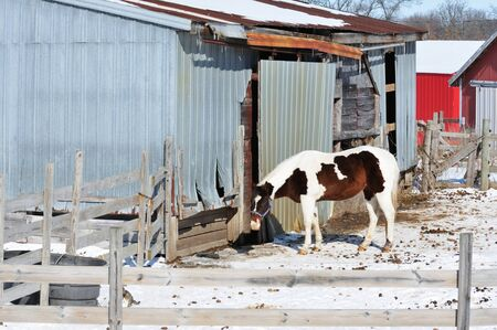 Pinto in Corral photo
