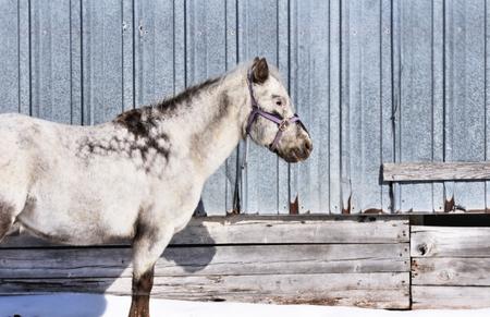 gray horse: Gray Horse