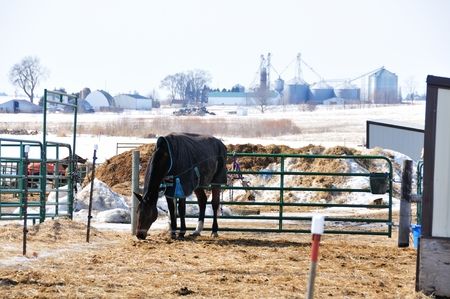 Horse in Corral photo