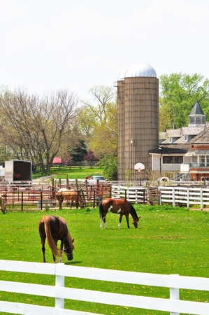 chacra: Horse Ranch