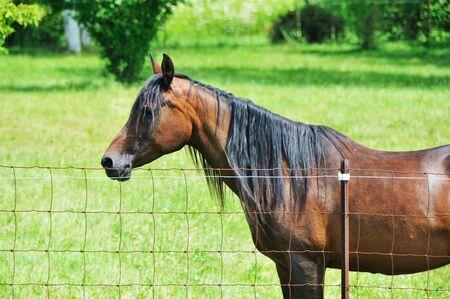 in profile: Horse Profile