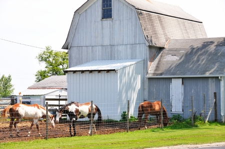 old barn: Horses by Old Barn