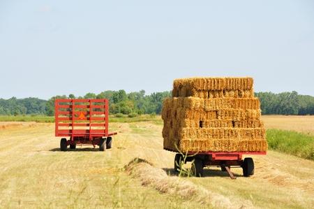 hay: Hay Wagons