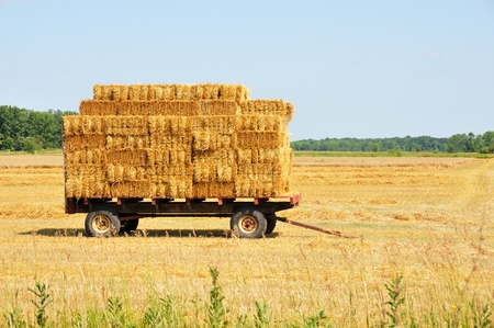 hay: Hay Wagon