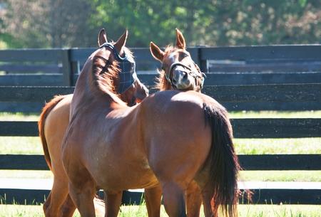 Biting Horses