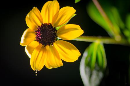매크로 태양 꽃 사진