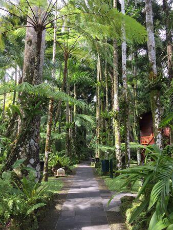 style: Raninforest garden style