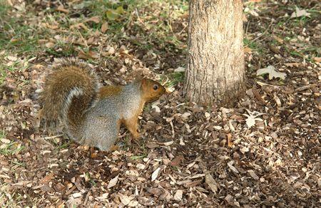음식을 찾고 다람쥐