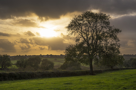 Sunset in farm fields with tree and beautiful cloudy sky, Cornwall, UK Banco de Imagens - 33739853
