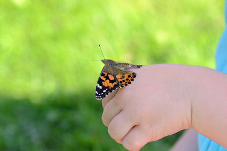 painted lady butterfly newly hatched on childs hand Banco de Imagens