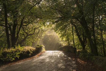 old stone bridge in early morning light through trees Banco de Imagens - 33786189