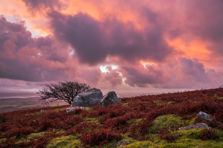 Pink purple orange sunrise with tree at Caradon Hill, Cornwall, UK