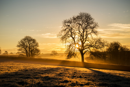 Frosty tree silhouette at sunrise Banco de Imagens