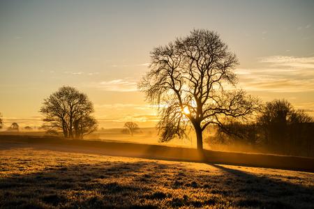 winter sunrise: Frosty tree silhouette at sunrise Stock Photo