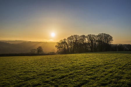 cornwall: Silhouetted trees at sunrise in fields, Cornwall, UK